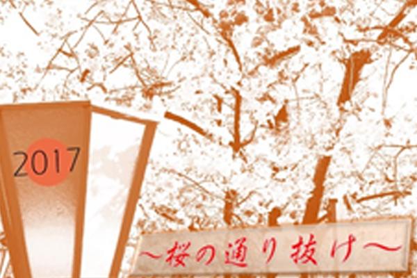 ブログ用eye桜の通り抜け表紙