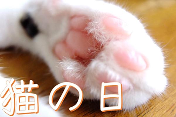 ブログ用eye 猫の日表紙