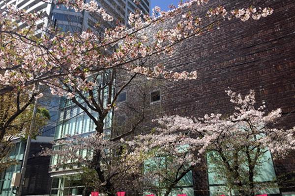 ブログ用桜前線 05