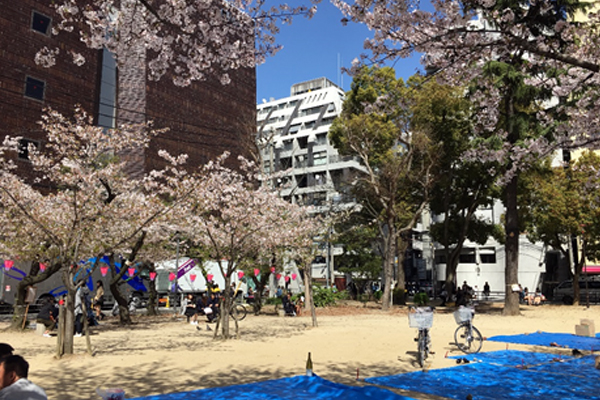 ブログ用桜前線 04