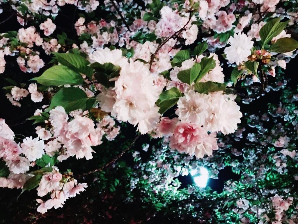 桜2 09