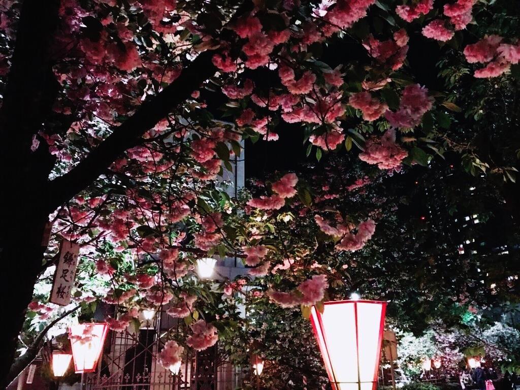 桜2 05
