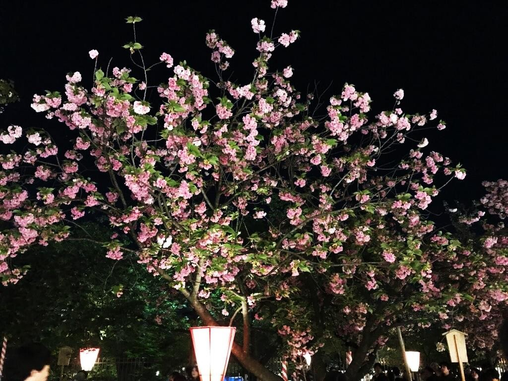 桜2 06