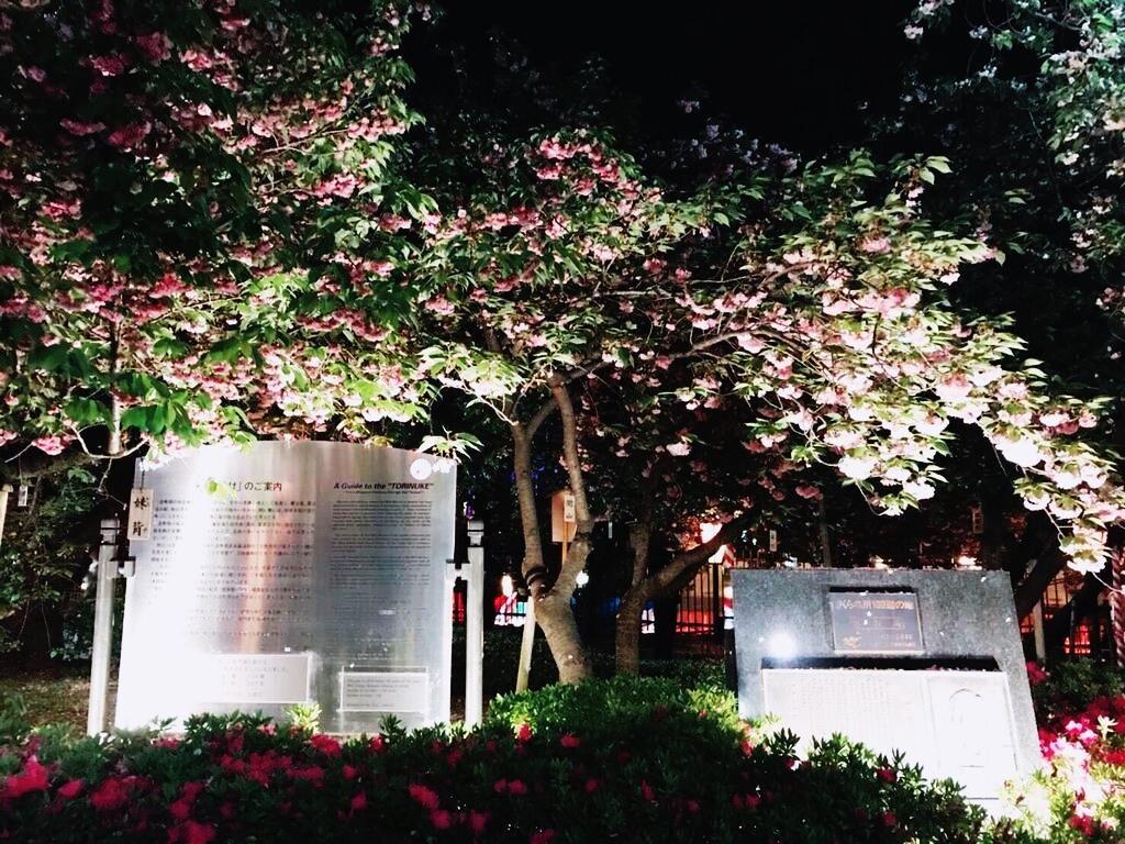 桜2 08