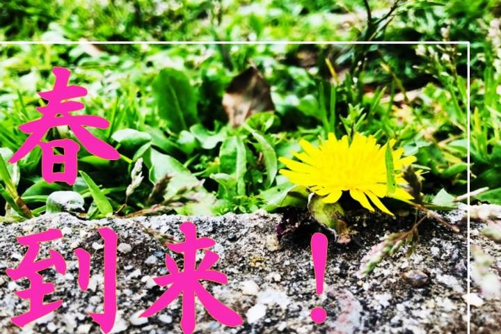 春到来!00 表紙