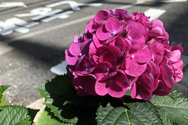ブログ用eye00梅雨0622