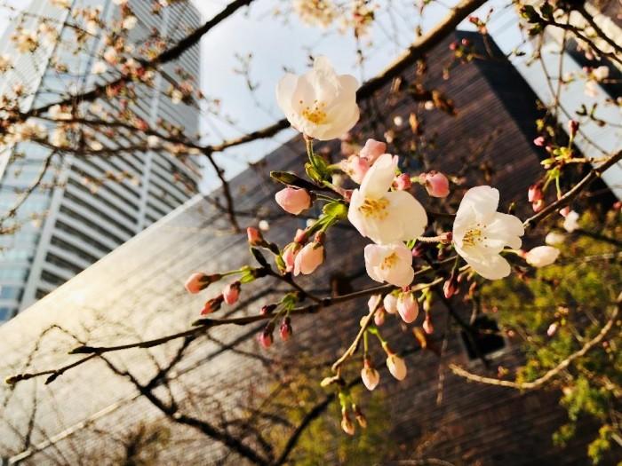 春到来!03